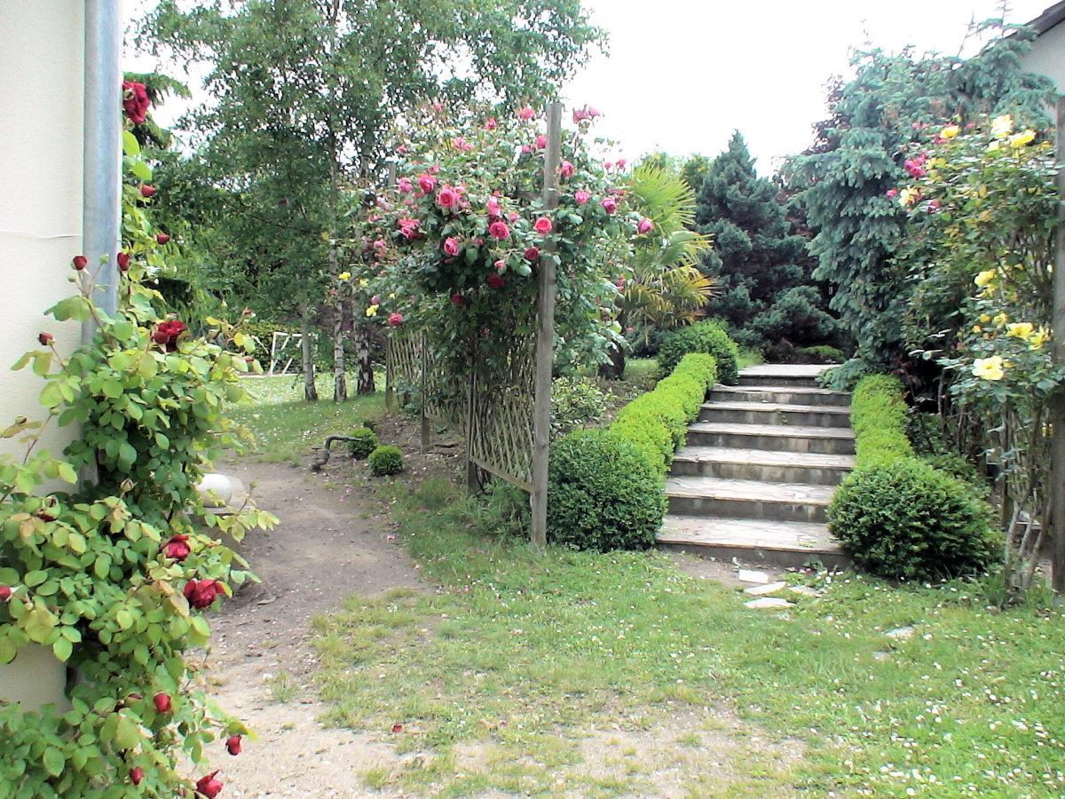 Recherche Plante Pour Remplacer Buis Au Jardin Forum De Jardinage